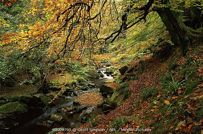 Burbage brook, Peak District NP, Derbyshire, UK  -  Geoff Simpson/ npl
