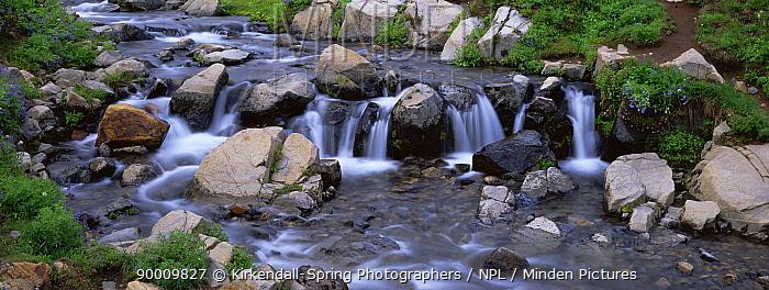 Edith Creek in Mount Rainier NP, Washington, USA  -  Kirkendall-spring/ npl