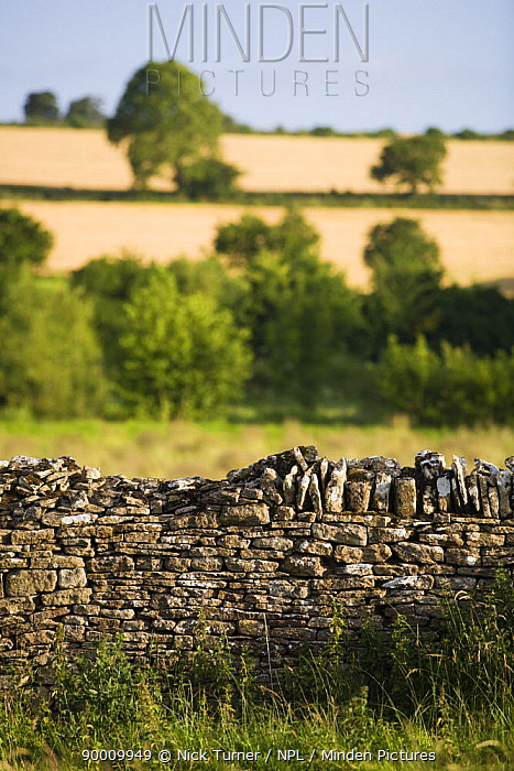 Cotswold dry stone wall and countryside, Widford, Oxfordshire, UK  -  Nick Turner/ npl