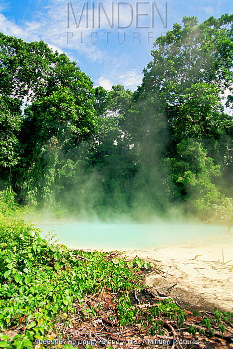 Steam rising from thermal springs, New Britain, Bismarck Archipelgo, Papua New Guinea  -  Doug Perrine/ npl