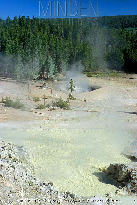Acidic springs in Sulphur Caldron, Yellowstone NP, Wyoming, USA  -  Philippe Clement/ npl