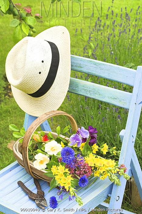 Summer Garden scene with hat and cut flowers in trug on garden seat, UK  -  Gary K. Smith/ npl