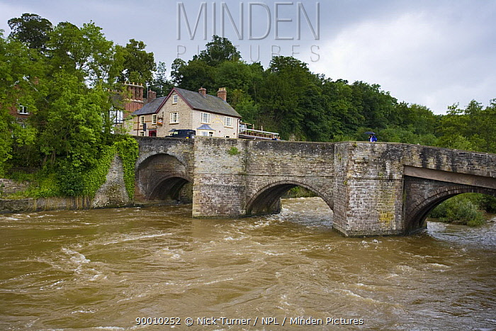River Corve in spate at Ludlow, Shropshire after torrential rain of June 2007  -  Nick Turner/ npl