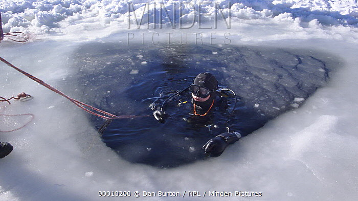Diver in ice hole about to dive under ice in the White Sea, Northern Russia March 2008  -  Dan Burton/ npl