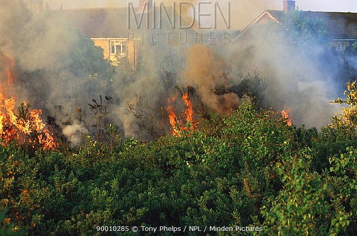Urban heathland fire encroaching on houses, Turbary common, Dorset, UK  -  Tony Phelps/ npl