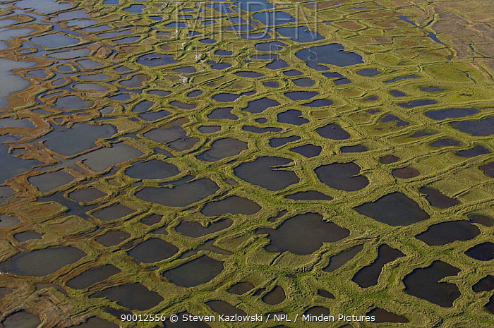 Thermokarst lakes covering the tundra landscape along the Arctic coast in the National Petroleum Reserves, Alaska These widespread geomorphologial features are formed by the freezing and thawing of Arctic ice and permafrost  -  Steven Kazlowski/ npl
