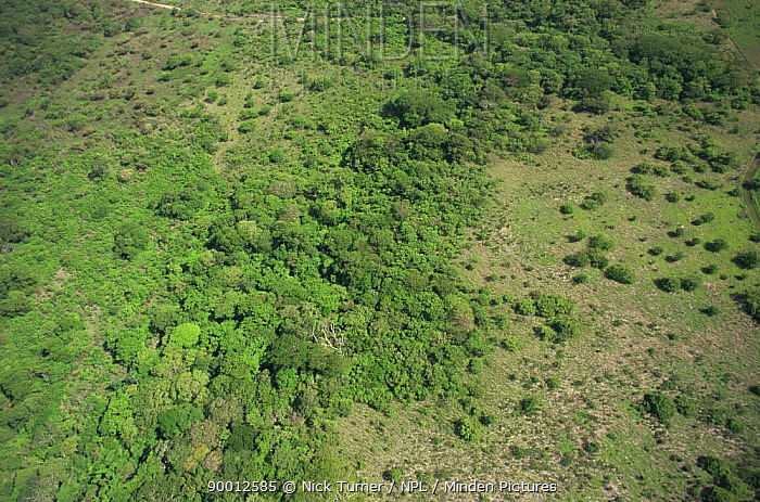 Aerial view of regenerating tropical dry forest, Santa Rosa NP, Costa Rica  -  Nick Turner/ npl