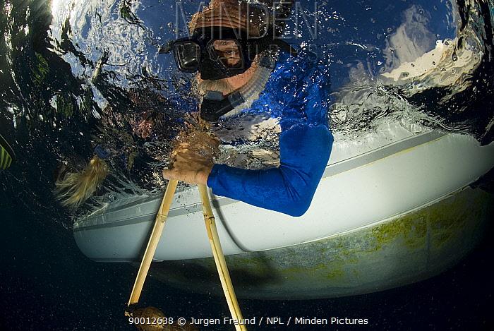 Scientists on the Undersea Explorer research vessel testing a coconut rattle to attract sharks Queensland, Australia  -  Jurgen Freund/ npl