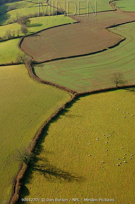 Aerial view of patchwork of fields and hedges, Devon, UK  -  Dan Burton/ npl