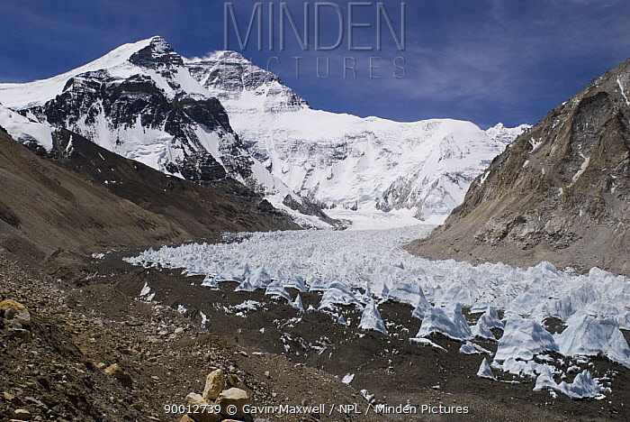 Rongbuk Glacier with Mount Everest, Tibet, June 07 'Wild China' series  -  Gavin Maxwell/ npl