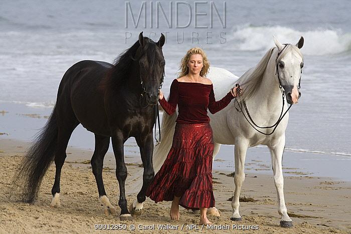 Woman leading black and grey Arabian stallions along the beach, Ojai, California, USA, model released  -  Carol Walker/ npl