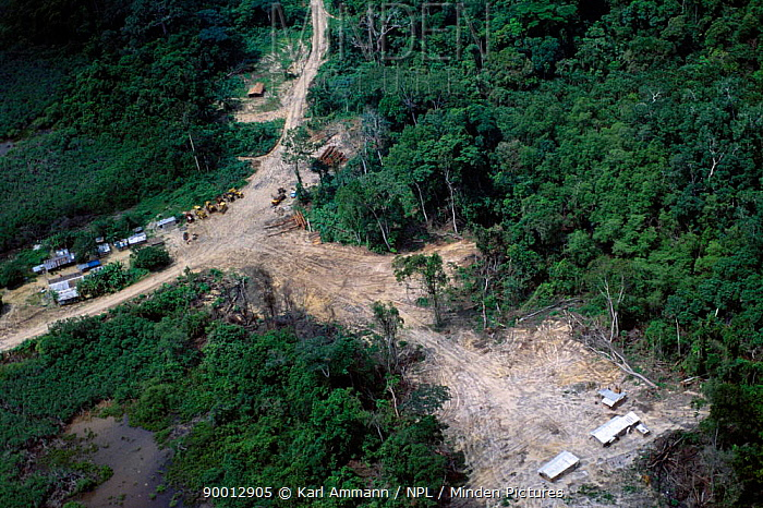 Aerial view of logging camp, Gabon, Central Africa Camps attract hunters, who sell bushmeat to the local workforce and clear-cut large forest sreas for slash and burn farming Logging vehicles are also used to carry bushmeat into urban centers  -  Karl Ammann/ npl