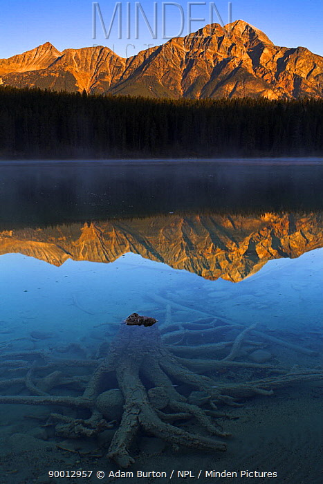 First light at Patricia Lake, Jasper National Park, Alberta, Canada  -  Adam Burton/ npl