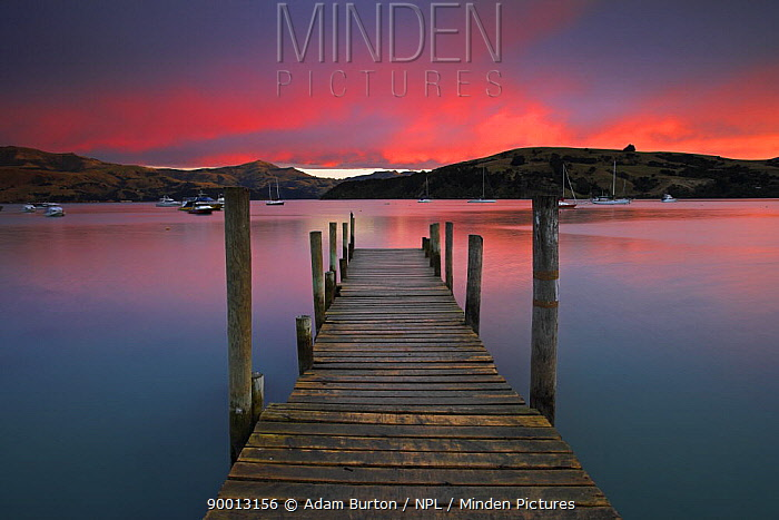 Sunrise over Akaroa harbour, Canterbury, South Island, New Zealand  -  Adam Burton/ npl