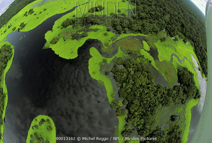 Wide angle aerial view of flooded forest in the rainy season, with aeroplane reflected in the water Rio Negro, Amazon, Brazil, 1994  -  Michel Roggo/ npl