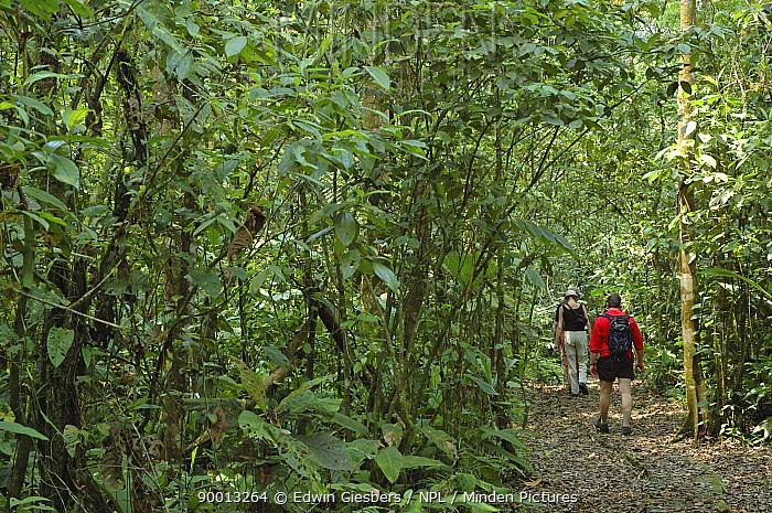 Tourists walking along path through rainforest, Costa Rica  -  Edwin Giesbers/ npl