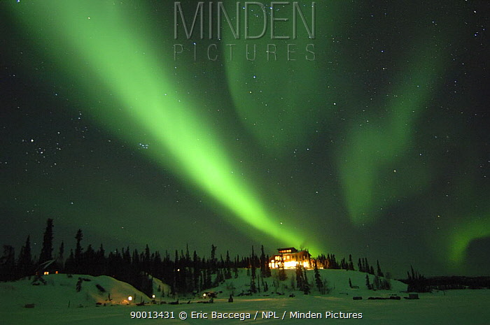 Northern lights (Aurora borealis) over Blachford Lodge, Northwest Territories, Canada March 2007  -  Eric Baccega/ npl