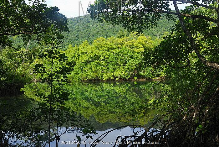Mangrove in Daintree National Park, Queensland, Australia  -  Jouan & Rius/ npl