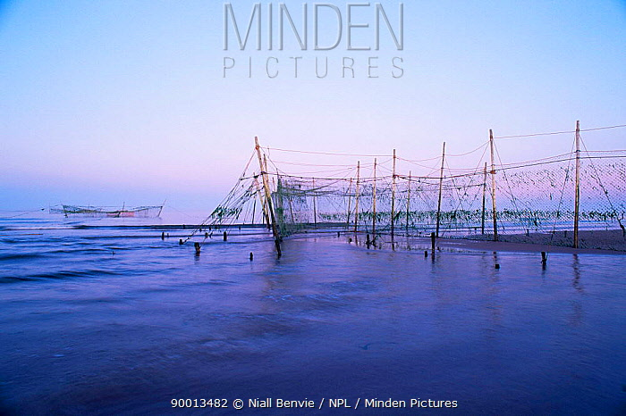 Salmon fishing stake nets at dusk Kinnabar, Angus, Scotland  -  Niall Benvie/ npl