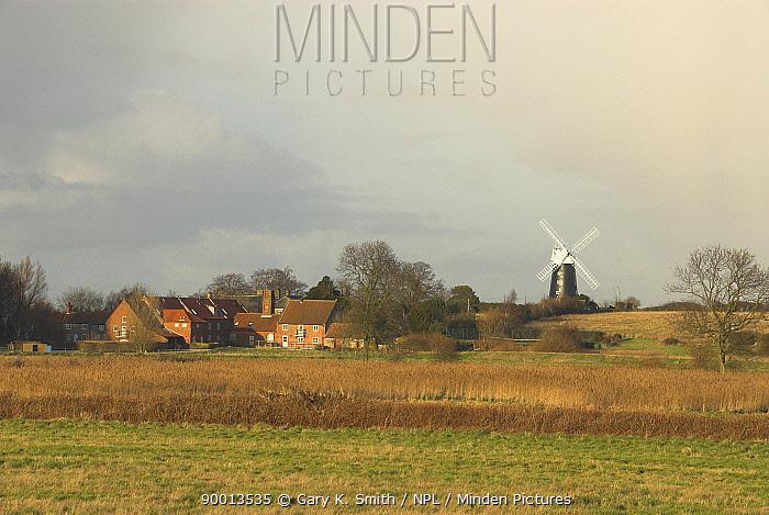 Burnham Overy Windmill and water mill, Norfolk, UK, february  -  Gary K. Smith/ npl