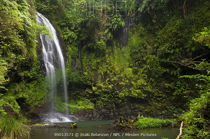 Cascade sacree, The sacred waterfall, Montagne d'Ambre National Park, North Madagascar  -  Inaki Relanzon/ npl