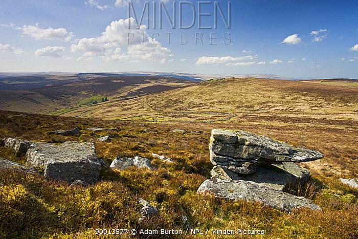 Granite outcrops on moorland, near Grimspound, Dartmoor NP, Devon, UK  -  Adam Burton/ npl