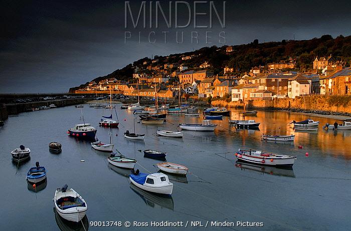 Mousehole harbour in evening light, West Cornwall, UK  -  Ross Hoddinott/ npl