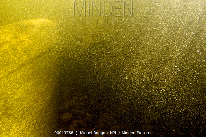Underwater landscape beneath waterfall, Sand�la, Norway, July  -  Michel Roggo/ npl