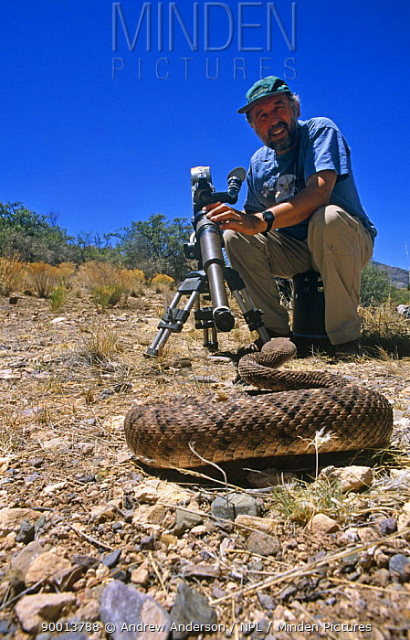 Camerman Andrew Anderson on location in Arizona, filming a rattlesnake for BBC series Predators, 2000  -  Andrew Anderson/ npl