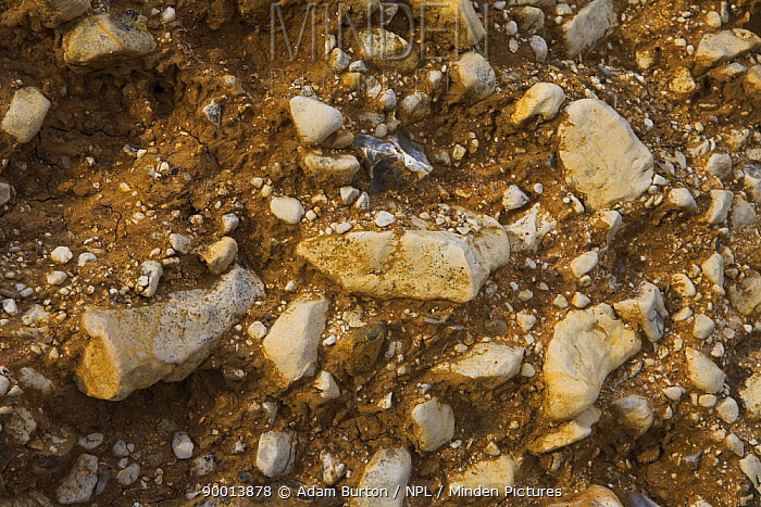 Sedimentary rocks in cliffs on south of the Isle of Wight, Hampshire, England  -  Adam Burton/ npl
