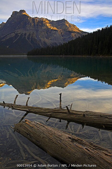 Reflections at Emerald Lake, Yoho National Park, British Columbia, Canada  -  Adam Burton/ npl