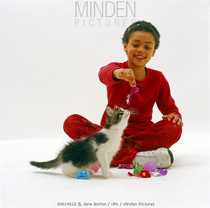 Domestic Cat (Felis catus), girl plays with 10-week tabby-and-white kitten  -  Jane Burton/ npl