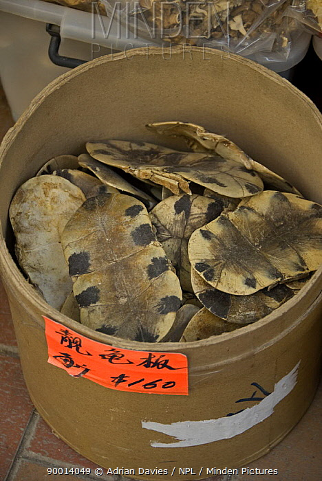 Turtle shells for sale in Chinese Herbal Medicine market, Hong Kong, China  -  Adrian Davies/ npl