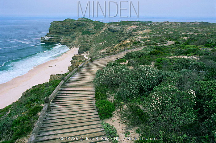 Wooden walkway across sand dunes, Cape Peninsula, Cape of Good Hope, South Africa  -  Jose B. Ruiz/ npl