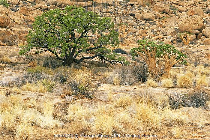Brandberg mountain, site of ancient rock cave paintings, Namibia  -  Vincent Munier/ npl