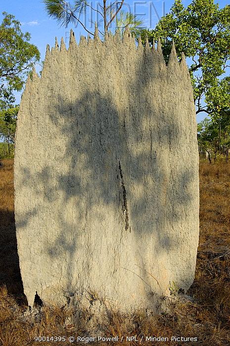 Termite (Isoptera)termite mound, Northern Territory, Australia  -  Roger Powell/ npl