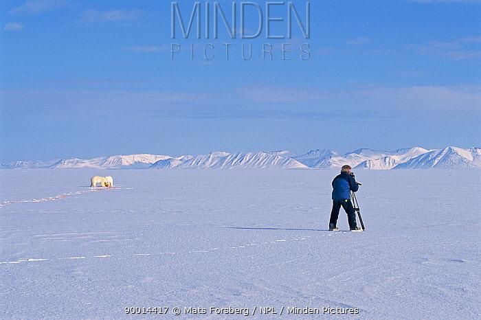 Martin Saunders filming Polar bears feeding, Svalbard, Norway, on location for BBC NHU 'Blue Planet' April 1996  -  Mats Forsberg/ npl