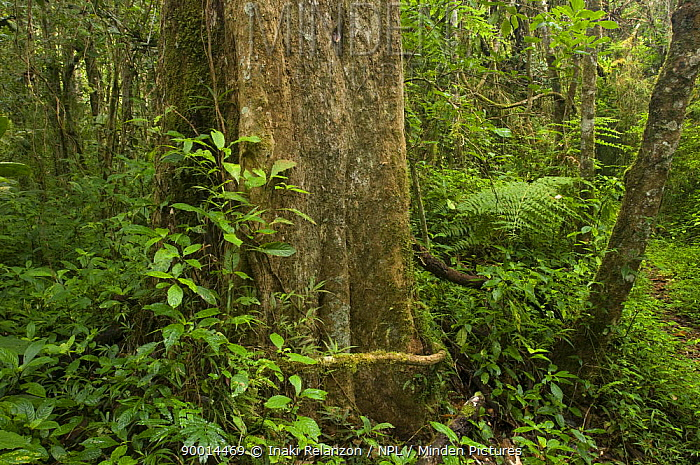 Rainforest plants, Andasibe-Mantadia National Park, Madagascar  -  Inaki Relanzon/ npl