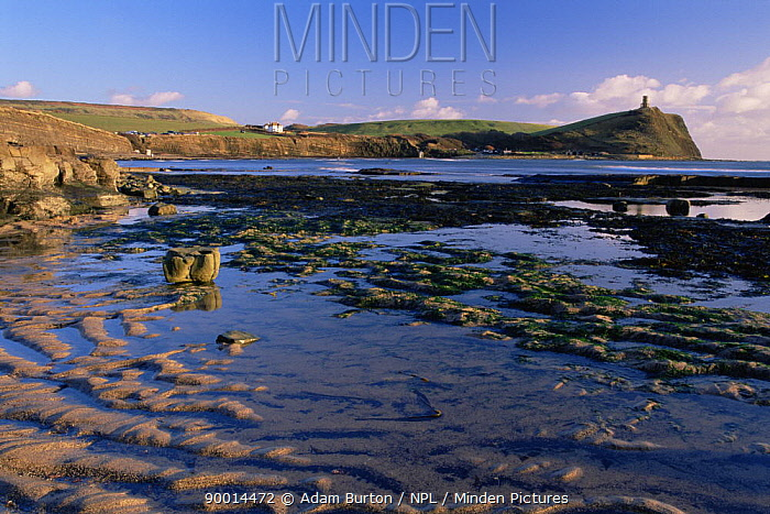 Rock pools and sand ripples at low tide on Kimmeridge Bay, with 19th century folly Clavell's Tower on headland Jurassic Coast World Heritage Site, Dorset  -  Adam Burton/ npl