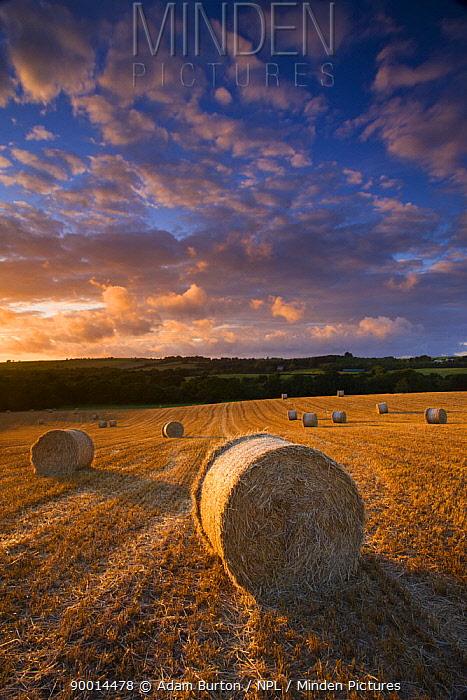Round straw bales in field, Morchard Bishop, Mid Devon, England  -  Adam Burton/ npl
