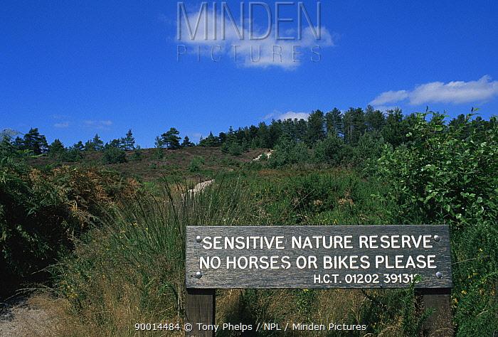 Heathland reserve Herpetological Conservation Trust, Wareham, Dorset, UK  -  Tony Phelps/ npl