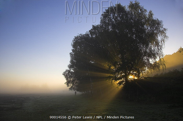Sun shining through the trees and mist just after sunrise, New Forest NP, Hampshire, UK  -  Peter Lewis/ npl