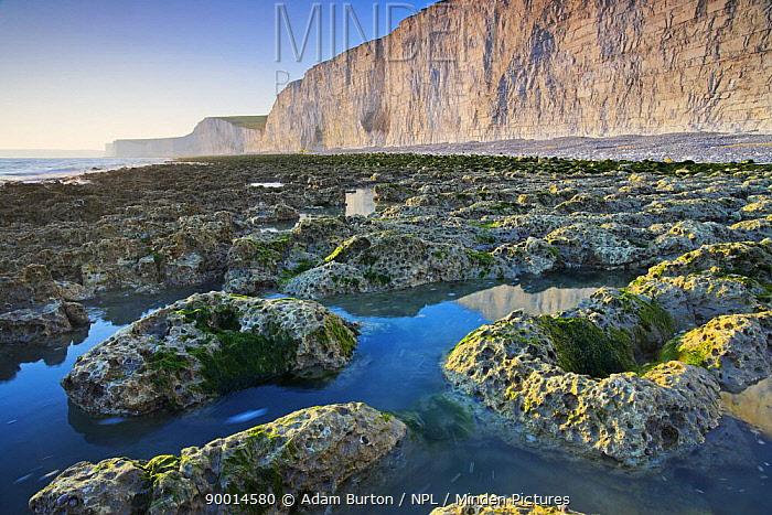 Rockpools below white chalk cliffs of Birling Gap, East Sussex, England  -  Adam Burton/ npl