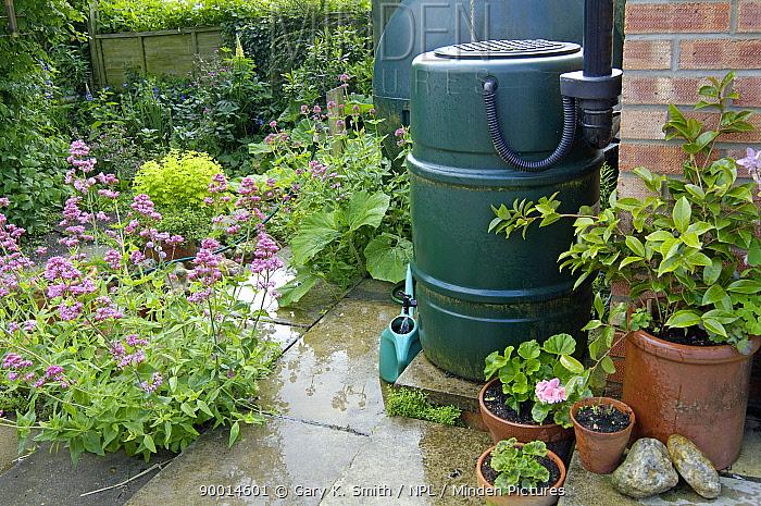Garden water-butt with rain saving device, UK  -  Gary K. Smith/ npl