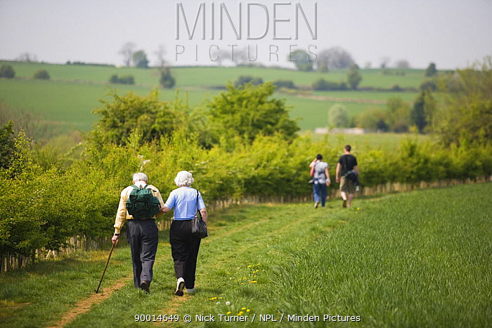 Walkers in Cotswolds countryside, Lower Slaughter, Gloucestershire, UK  -  Nick Turner/ npl
