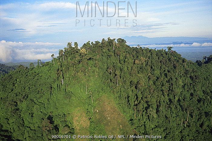 Mindanao Island, Philippines  -  Patricio Robles Gil/ npl