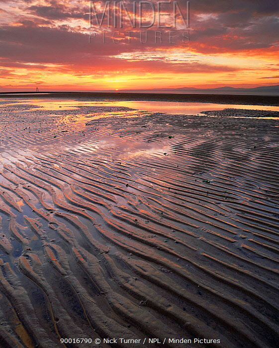 Mudflats at sunset during low tide, Solway Firth, Cumbria, UK  -  Nick Turner/ npl