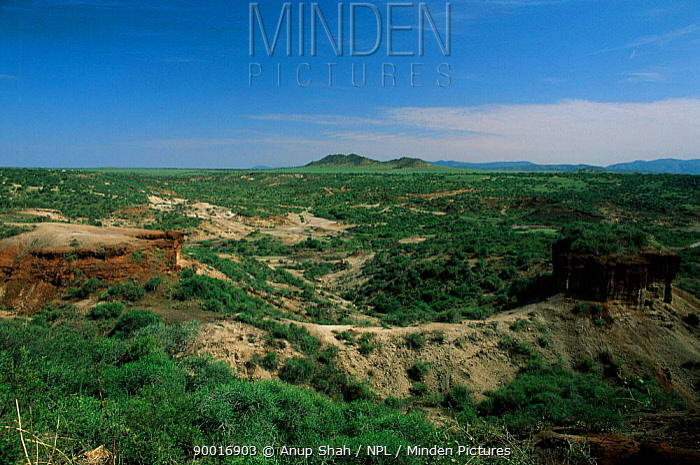 Hell's Gorge, Oldrgesaille, Olduvai, Serengeti National Park, Rift Valley, Tanzania  -  Anup Shah/ npl