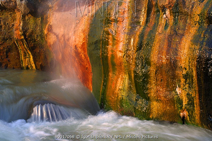 Hot water flowing from geysers creates a favorable environment a variety of colourful algae in the Valley of the Geysers, Kronotsky Zapovednik, Kamchatka, Far East Russia  -  Igor Shpilenok/ npl