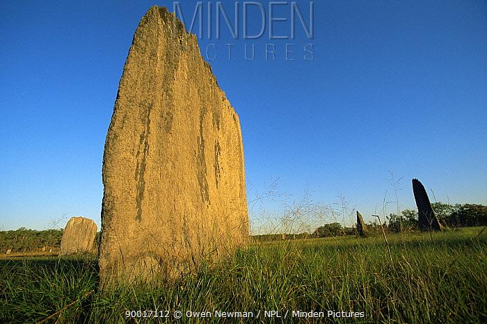 Magnetic termite mound, Litchfield NP, Northern Territory, Australia  -  Owen Newman/ npl